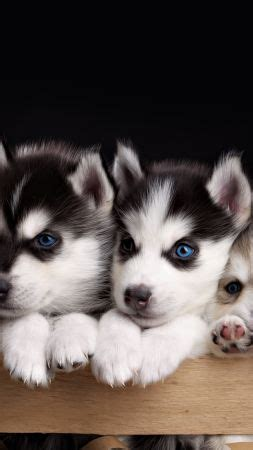 hd animal wallpapers    animal pictures  names