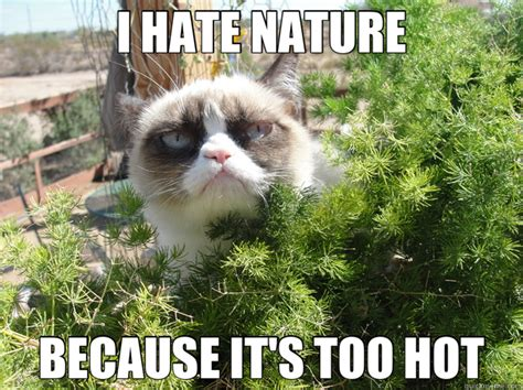 Sexy Cat Meme - grumpy cat meme hot summer pictures to pin on pinterest
