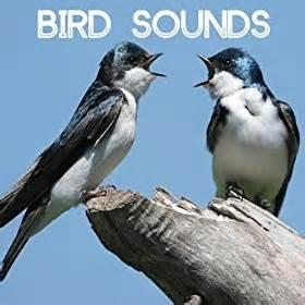 amazon com bird sounds gentle birds and forest stream