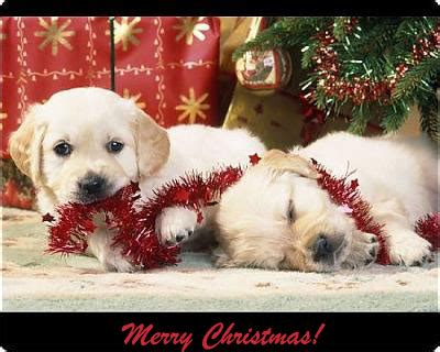 free printable christmas cards dogs free printable dog breed christmas cards