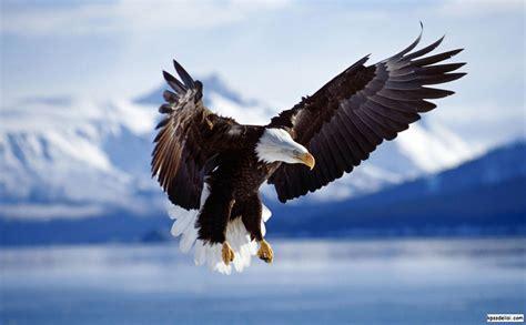 best eagle kartal resimleri