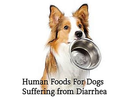 what helps dogs with diarrhea 10 human foods for dogs with diarrhea or upset stomach pethelpful