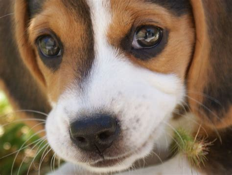 dogs animal facts encyclopedia