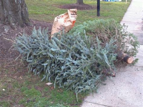 reminder recycle your christmas tree at fort greene park