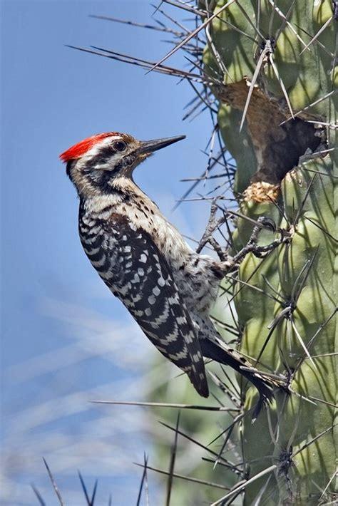 santa fe winter vacations birds of northern new mexico