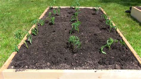 how to prepare a raised bed garden 8 steps with pictures