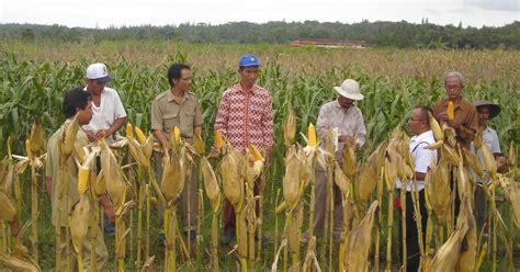 Benih Biji Bidara Upas bp3k nanggulan panen jagung hibrida