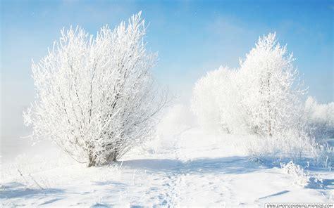 frozen winter wallpaper frozen bushes wallpaper free desktop wallpapers cool