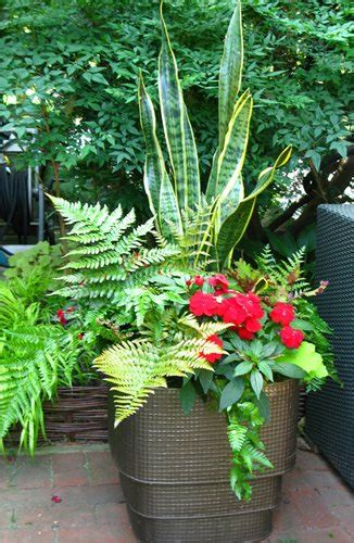 Plant Combination Ideas For Container Gardens Garden Transformation Landscaping Network