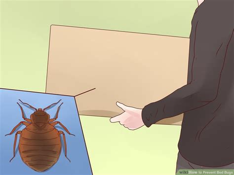 how do bed bugs get into your house how do bed bugs get into your house 28 images