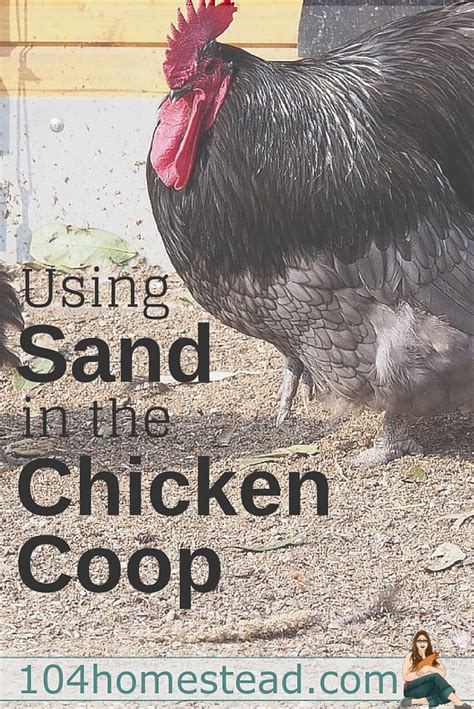 how to keep chickens in your backyard 100 how to care for chickens in your backyard the