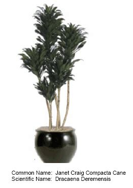 best indoor plants for low light blumuh design indoor plants for office and home serving all of san