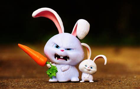images animal cute rabbit hare pets children