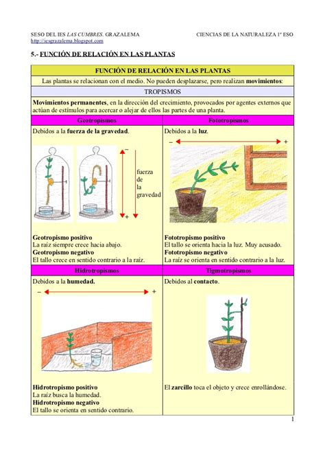 brevisima relacion de la 8437603412 5 funci 243 n de relaci 243 n en las plantas