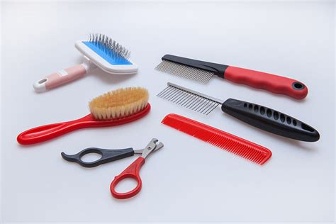 grooming equipment grooming your cat cat care cats guide omlet uk