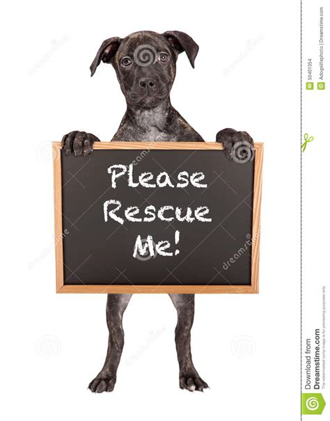 Me Me Me Signed - cute puppy holding rescue me sign stock photo image