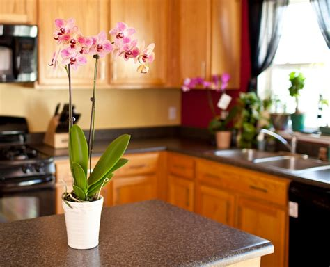 orchid delivery 5 situations when orchid delivery is a lifesaver