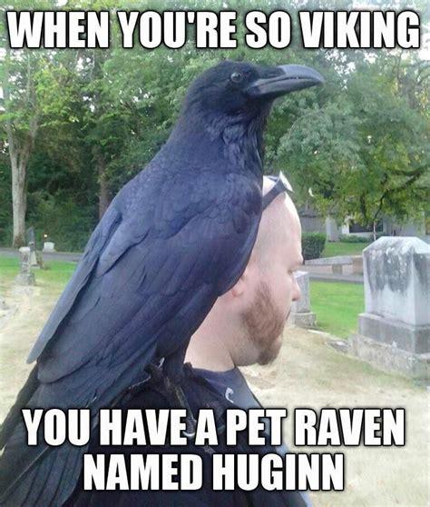 viking memes best 25 viking meme ideas on ragnar quotes