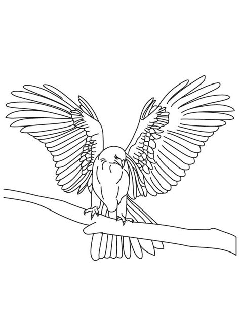 eagle wings coloring page golden eagle coloring page coloring home