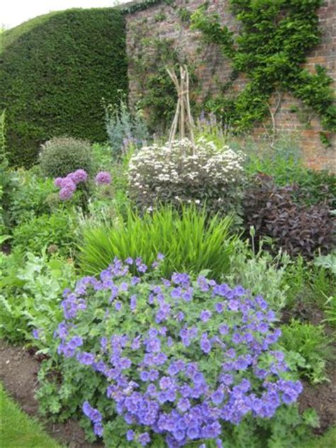 cottage garden perennials uk plant sales open gardens the cottage garden society
