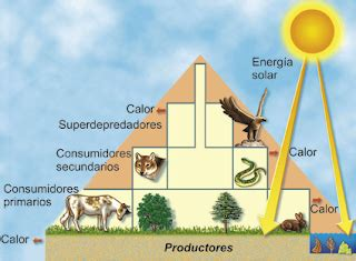 cadena trofica definicion pdf desarrollo sustentable 2 2 flujo de energ 237 a