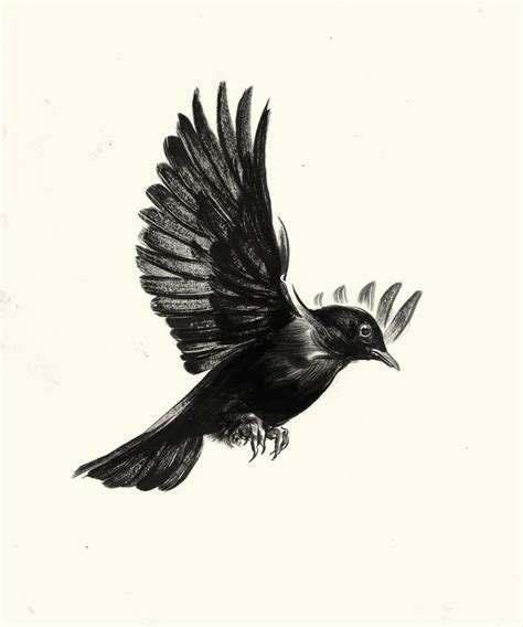 best 25 blackbird ideas on pinterest crows ravens