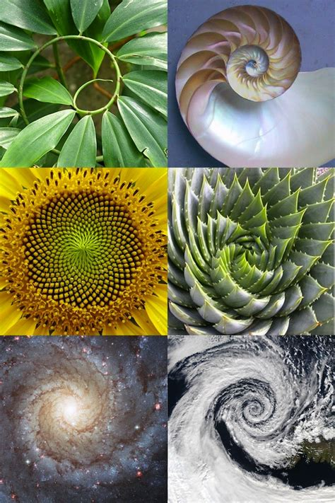 number pattern found in nature 187 patterns found in nature and music