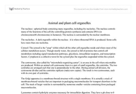 Animal Cell Essay by Plant Cells Vs Animal Cells Essay Writefiction581 Web Fc2