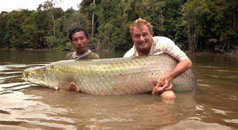 ikan terbesar terkuat  dunia berhasil ditangkap