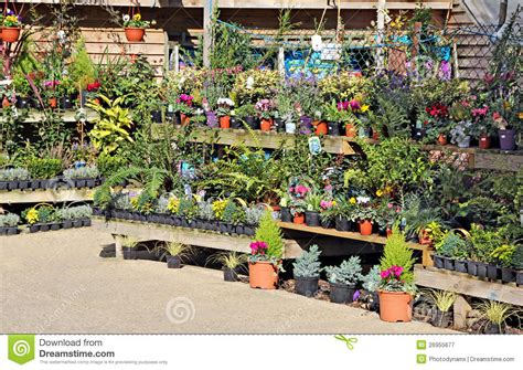 Garden Of Nursery Nursery Garden Plants Royalty Free Stock Photography