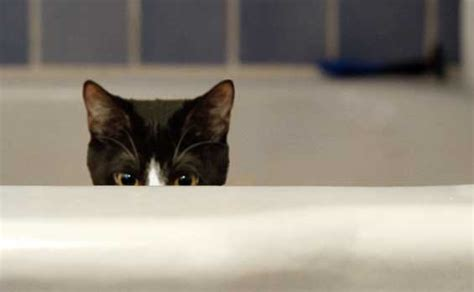 cats in bathtubs matthew destwolinski how not to be found by your customers