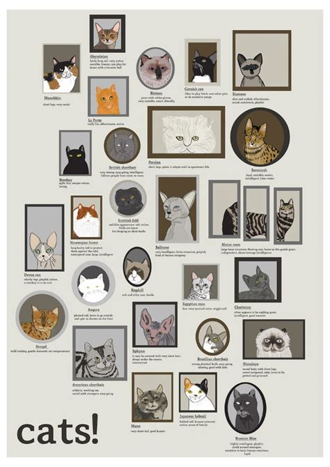 types of cats 8 best images about cat breeds on pinterest cats