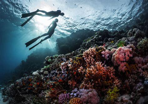 red sea scuba diving holidays  egypt  sudan