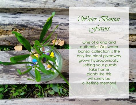 Bonsai Wedding Giveaways - supplier spotlight go green giveaways wedding philippines wedding philippines