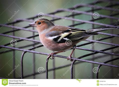 Bird On A Wire In A Cage Its All The Same by Bird On Wire Cage Stock Images Image 22492194
