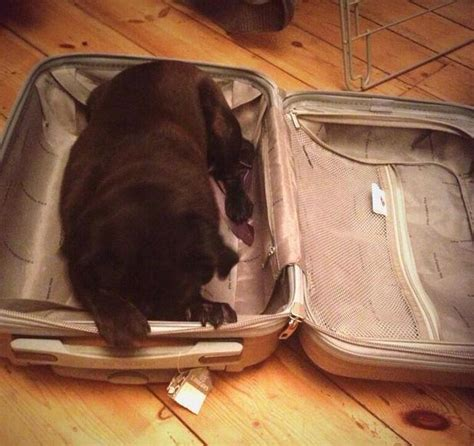 smith s dogs smith s makes a for freedom in luggage news