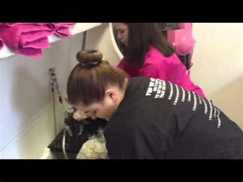petco do it yourself wash reber ranch do it yourself wash kent wa funnydog tv