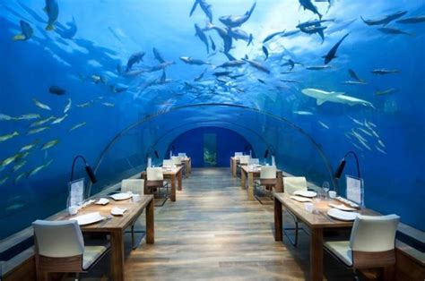 ithaa undersea restaurant prices the 10 most expensive restaurants in the world
