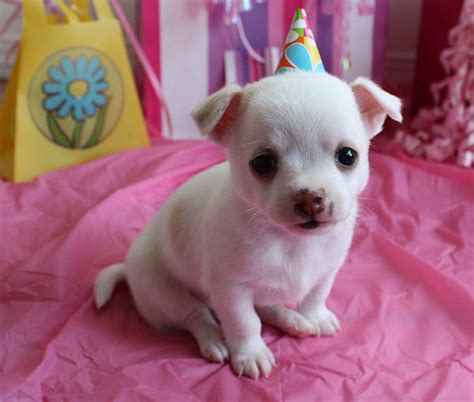 puppy birthday 1000 images about pictures on