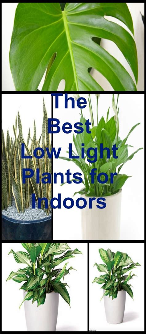 plants that do well in low light 25 best ideas about indoor plants low light on