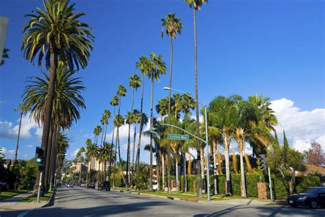 palms throughout the world 11 fascinating facts about palm trees