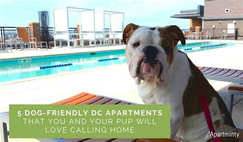 Pet Friendly Appartments by 5 Dc Friendly Apartment Buildings Apartminty