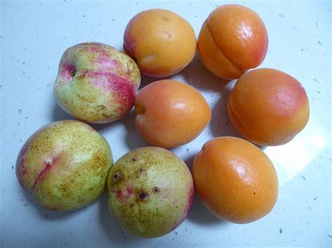 tree ripened fruit yum gwendaj blipfoto - Tree Ripened Fruit