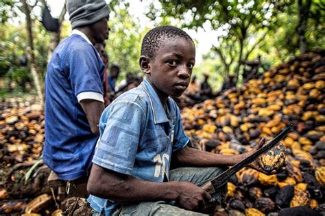 ivory coast raises 20m to fight child slavery on cocoa field how africa news