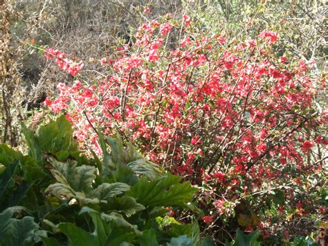 quince bush el gallinero quot el gallinero quot an artists writers refuge in granada