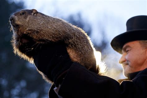 groundhog day italiano meteorologists punxsutawney phil predict 6 more weeks of