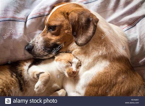 Hund Und Katze In Einem Haushalt 3861 hund und katze in einem haushalt hund und katze unter