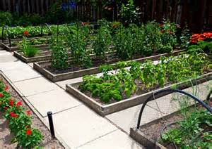 Raised Bed Vegetable Garden Layout Raised Garden Beds Versus Row Gardening How To Build A House
