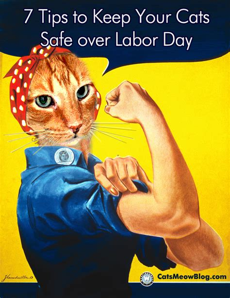 7 Tips On Keeping Your Safe by 7 Tips To Keep Your Cat Safe Labor Day Catster
