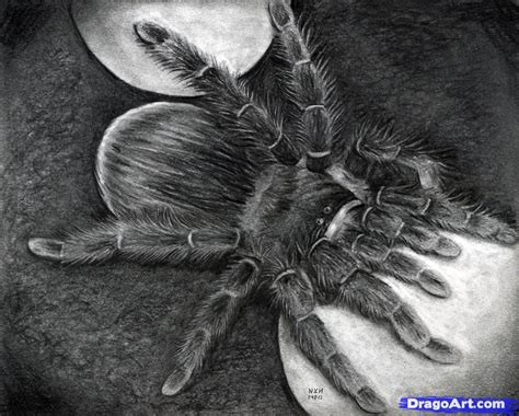 make a drawing how to draw a spider real spider step by step realistic